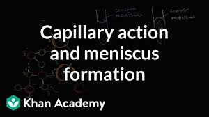 Capillary Action And Why We See A Meniscus Video Khan