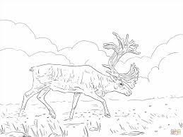 Small Picture Rudolph Reindeer Coloring Page The Red Nosed Reindeer Coloring