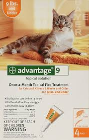 imidacloprid for cats.  Cats Advantage OnceAMonth Topical Flea Treatment For Cats U0026 Kittens Up To 9 Intended Imidacloprid For L