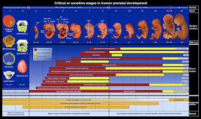 Chart Of Critical Periods Of Human Development Scitechlab