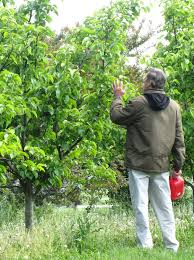 Agricultural Regions In MichiganWhat Fruit Trees Grow In Michigan
