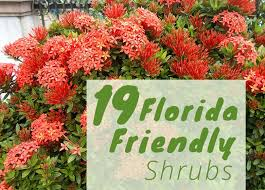 the best shrubs to grow in florida 19