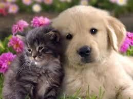 cute puppy and kitten best friends. Delighful Cute Image Is Loading BESTFRIENDSCATampDOGGLOSSYPOSTERPICTURE In Cute Puppy And Kitten Best Friends B