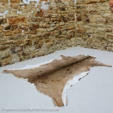 white tailed deer hide rug