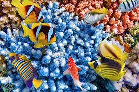 Australian Reef Fish Species Chart Fascinating Facts About The Great Barrier Reef