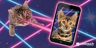 cats twitter background. Perfect Cats 754 AM  2 Sep 2016 To Cats Twitter Background O