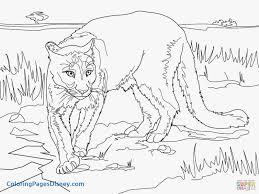 cougar mountain lion coloring page printable cougar mountain lion coloring cougar mountain lion