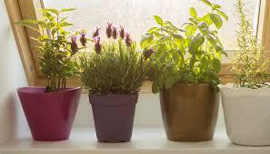 apartment herb garden. Interesting Garden With Apartment Herb Garden