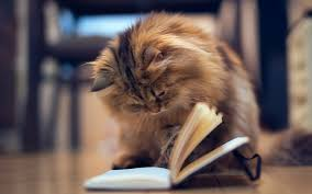 Image result for kitty with books