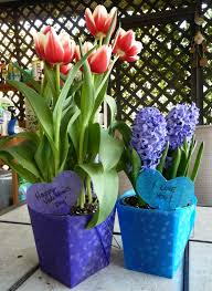 a quick fix for valentine s day potted plant gifts use plastic take out conners from the dollar learn more on the birds blooms