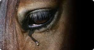 Risultati immagini per macello cavalli