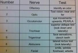 Cranial Nerve Testing Chart Athletic Training State