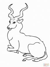Small Picture Wild Animal Coloring Pages Goat With Wiskers Coloring Page And
