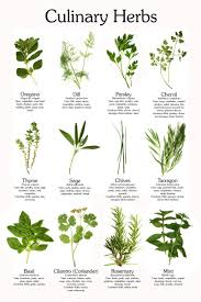 Printable Culinary Herb Chart Our Perennial Garden Has At Least 3 Herb Plants And I