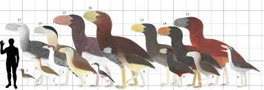 Bird Size Chart Pin By Ari Boehm On Cenozoica Birds Extinct Birds Prehistory