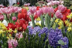 Small Picture Garden Design Garden Design with garden gallery itus time to