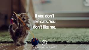 if you don t like cats you don t like me