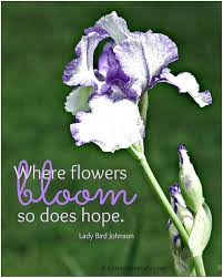 Spring Is Here Take Some Flowers Quotes