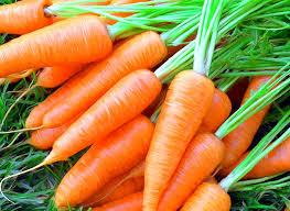 Картинки по запросу фото моркови