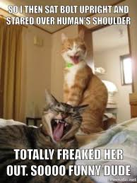 How to freak out your Human | animal humor | Pinterest | Cat, Meme ... via Relatably.com