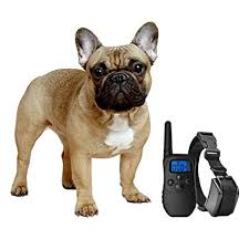 pictures of dogs for free 2. Contemporary Free EXuby Shock Collar For Small Dogs With Remote  Includes 2 Collars Small  And Medium In Pictures Of For Free 6