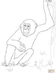 Small Picture Bonobo Chimpanzee coloring page Free Printable Coloring Pages