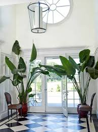 plants feng shui home layout plants. Feng Shui Plants Potted Floor Tiles Checkerboard Home Layout