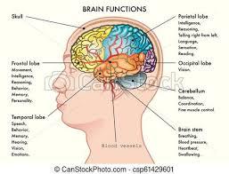 Brain Chart Brain Functions