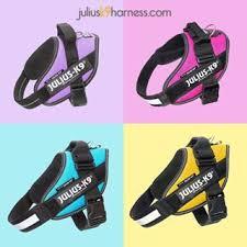 Julius K9 Size Chart Julius K9 Harness Stunning Colours