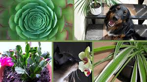 pet friendly houseplants for photo credits scroll down to bottom of the page