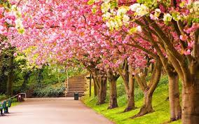 Spring Backgrounds, Pink Tree Spring ...