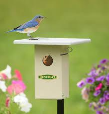 ez view bluebird house pole