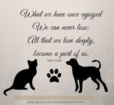 Loss Of A Cat Quotes Amazing Loss Of A Cat Quotes Cat And Dog Lovers