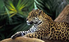 Sierra Álamos – Río Cuchujaqui (Area protegida) Images?q=tbn:ANd9GcT_wAH7k9TUUEsZlwX7gbccMD8Dwj3k4qg9H5Omk2PMVCMJ2TOW