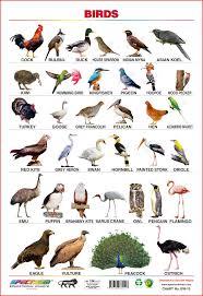 Hindi Birds Name Chart Buy Spectrum Educational Large Wall Charts Set Of 5