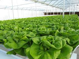 Реферат на тему Передовые технологии в сельском хозяйстве  clip image001