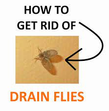 how to get rid of drain flies naturally