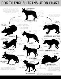 Wolf Body Language Chart Dog Body Language Knotty Toys For Good Dogs