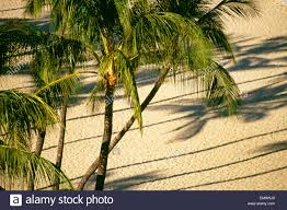 Image result for shadow of beach trees
