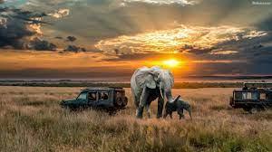 Elephant Hd Desktop Wallpaper - African ...