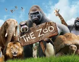 zoo. Fine Zoo Theyu0027re Back For Zoo Paignton