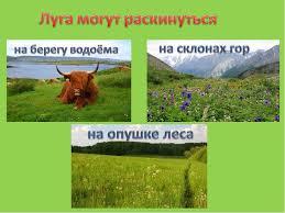 Презентация к уроку окружающего мира по теме Луг и его обитатели  metod kopilka ru