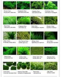 0_moss Chart Postimage Org Water Freshwater Aquarium