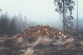 Logging Global Forest Atlas