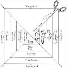 food web pyramid food chains food webs and energy pyramid worksheet answers 45