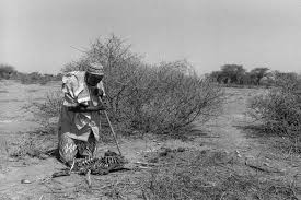 photos thousands die in parched so a un warns pbs newshour an elderly man regards one of his dead goats in so land where a worsening drought
