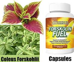 Image result for forskolin buy