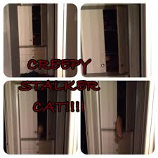 "Shawna Holt on Twitter: ""Watching scary movies+creepy stalker cat=a lot of  screaming!!! http://t.co/EyC4snwfMZ http://t.co/auP3IcD0LT"""