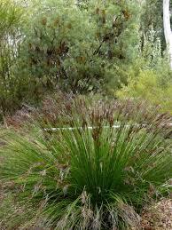 Small Picture 200 best Australian gardens images on Pinterest Australian
