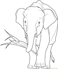 Small Picture African Elephant Eating Coloring Page Free Elephant Coloring